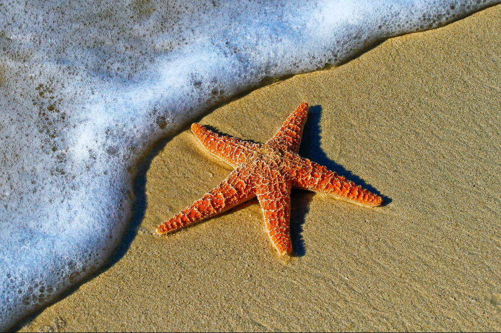 What-Is-a-Sea-Star-What-Happened-to-the-Starfish-Shore