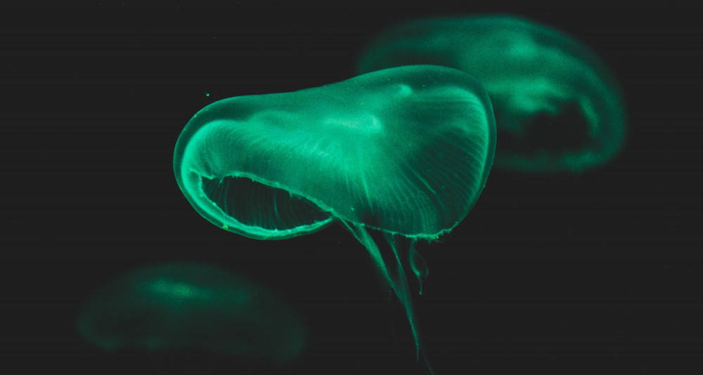 What-Is-the-Deep-Sea-An-Under-Explored-Depth-of-Darkness-Bioluminescence