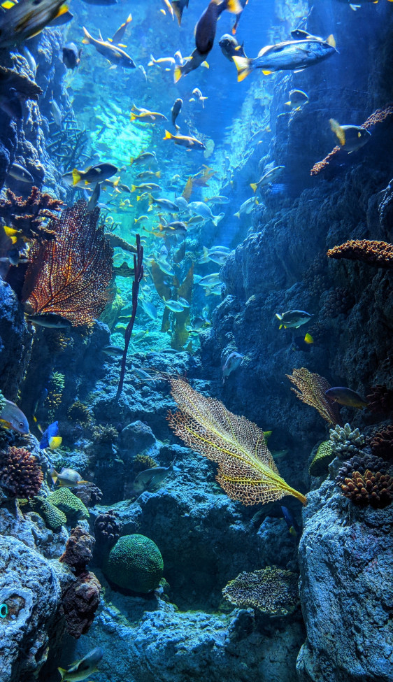 Why-Are-Coral-Reefs-Important-It's-an-Underwater-Ecosystem-Blue-Underwater