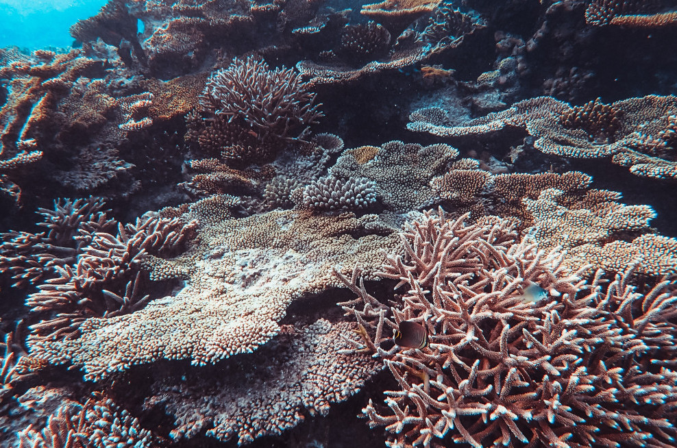 Why-Are-Coral-Reefs-Important-It's-an-Underwater-Ecosystem-Corals