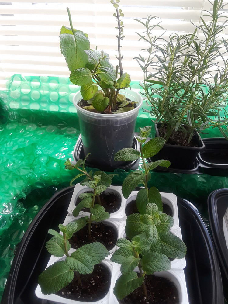 Grow-a-Windowsill-Garden-From-Your-Own-Kitchen-Scraps-Soil