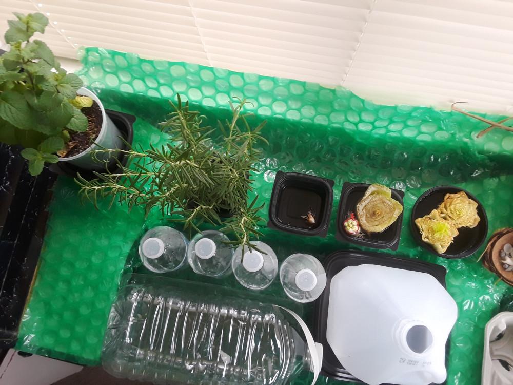 Grow-Your-Windowsill-Garden-From-Your-Own-Kitchen-Scraps-Garden